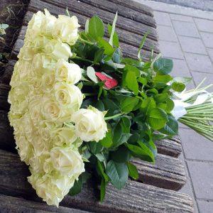 51 белая роза в Кропивницком фото