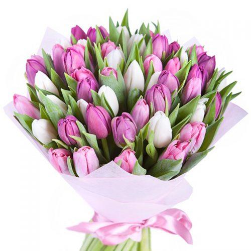 Фото товара 51 бело-розовый тюльпан