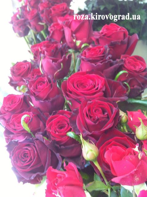 магазин цветов кропивницкий