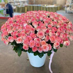 301 нежно-розовая роза в Кропивницком фото