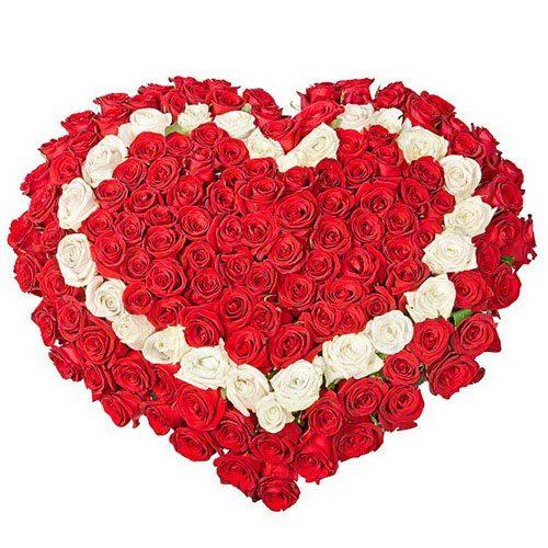 Фото товара 101 роза сердцем - красная, белая, красная