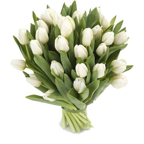 Фото товара 25 белых тюльпанов