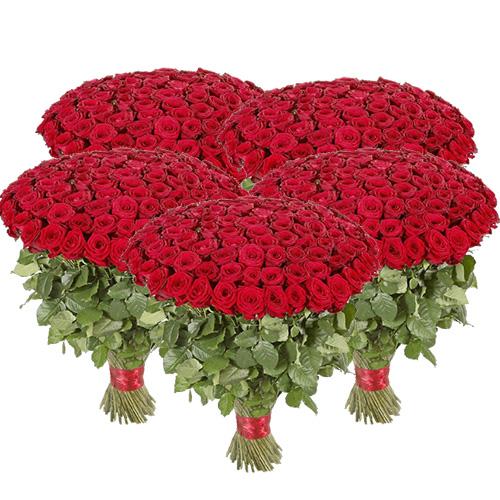 картинка 501 красная роза