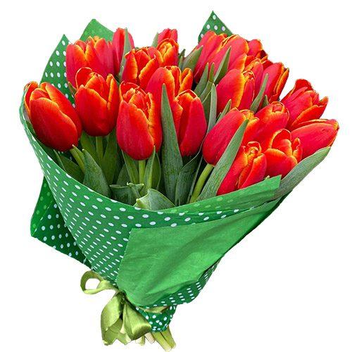 """Фото товара 21 тюльпан """"Маковый цвет"""""""