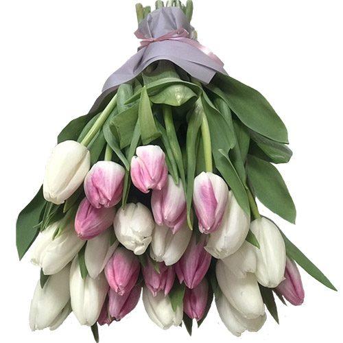 Фото товара 25 бело-розовых тюльпанов