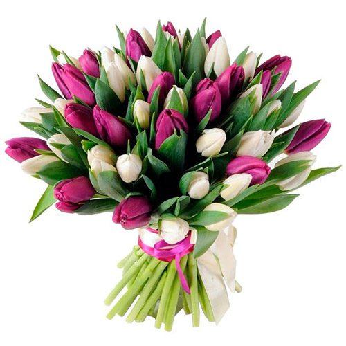 Фото товара 51 бело-пурпурный тюльпан (с лентой)