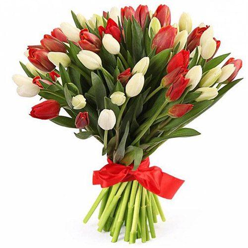 Фото товара 51 красно-белый тюльпан (с лентой)