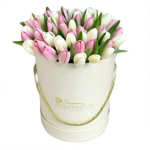 Фото товара 51 бело-розовый тюльпан в коробке