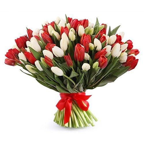 Фото товара 75 красно-белых тюльпанов (с лентой)